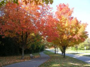 sun dappled fall bike path
